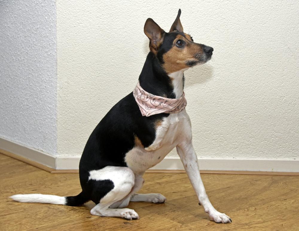 Hondje Macho met handicap opeens beroemd